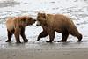 Bear_Beach_Fighting_Silver_Salmon__0017