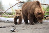 Bears_Silver_Salmon_Creek__0024