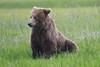 Bears_Silver_Salmon_Creek__0030