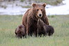 Spring_Cubs_Silver_Salmon_Creek__0031