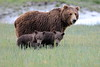 Spring_Cubs_Silver_Salmon_Creek__0028