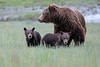 Spring_Cubs_Silver_Salmon_Creek__0025