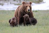 Spring_Cubs_Silver_Salmon_Creek__0029