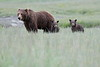 Spring_Cubs_Silver_Salmon_Creek__0018
