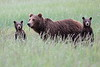 Spring_Cubs_Silver_Salmon_Creek__0006