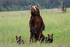 Standing_Bears_Silver_Salmon_Creek__0017
