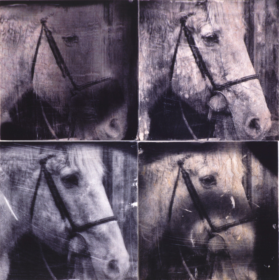 Warhol's Horse, 2002