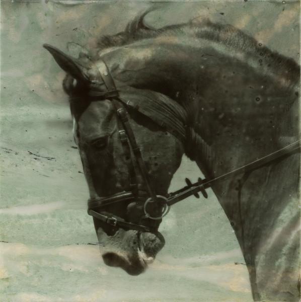 Green River Horse