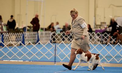 1st Place Puppy Gibbs