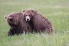 Bears_Silver_Salmon_Creek__0040
