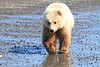 Brown_Bear_Tweens_Alaska (1)