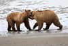 Bear_Beach_Fighting_Silver_Salmon__0012