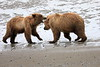 Bear_Beach_Fighting_Silver_Salmon__0013