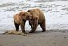 Bear_Beach_Fighting_Silver_Salmon__0034