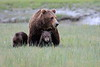 Spring_Cubs_Silver_Salmon_Creek__0024