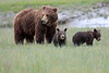 Spring_Cubs_Silver_Salmon_Creek__0023