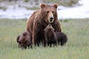 Spring_Cubs_Silver_Salmon_Creek__0030