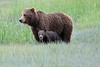Spring_Cubs_Silver_Salmon_Creek__0010