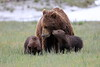 Spring_Cubs_Silver_Salmon_Creek__0033