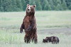 Standing_Bears_Silver_Salmon_Creek__0027