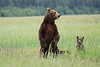 Standing_Bears_Silver_Salmon_Creek__0015