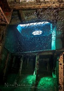 Shipwrecked Silversides