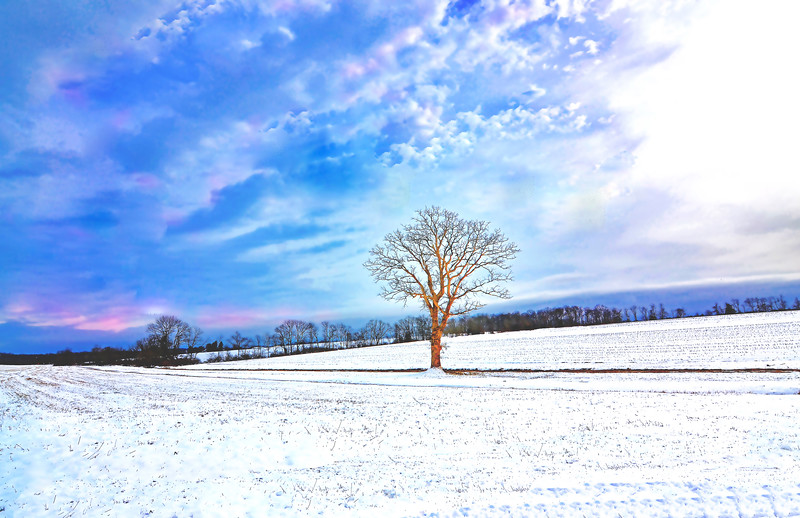 Lone Tree in a Snowy Field