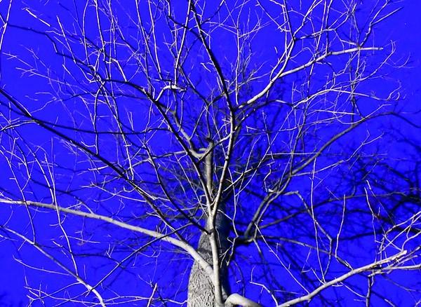Tree Against Winter Night Sky