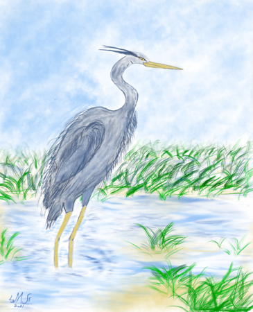 Blue Heron on a Marsh