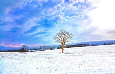 Lone Tree in a Snowy Field
