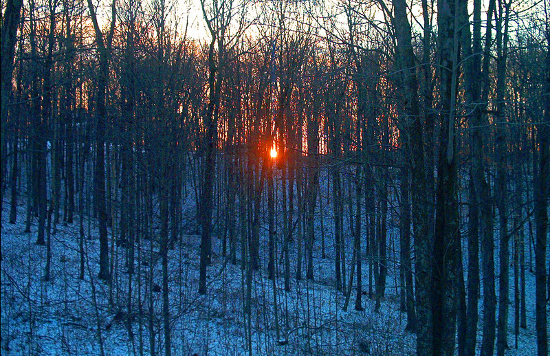 SunSet Through the Winter Trees