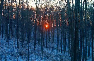 SunSet Through the Winter Trees