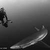 Blue Shark and Diver - Simon's Town by Tracey Jennings