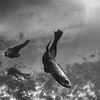Cape Fur Seals in play - Simon's Town by Tracey Jennings