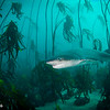 Happy Shark - Simon's Town by Tracey Jennings