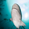 7 gill shark - Simon's Town by Tracey Jennings