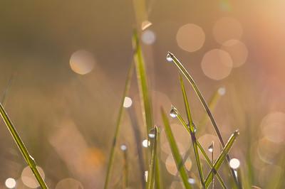 Spring Dew Drops