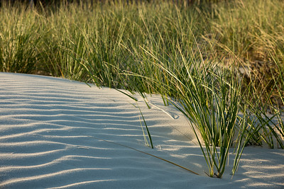 Early Morning Dunes