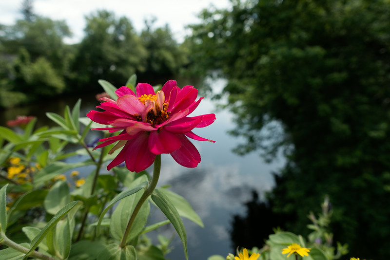 Flower Bridge_July 18, 2014