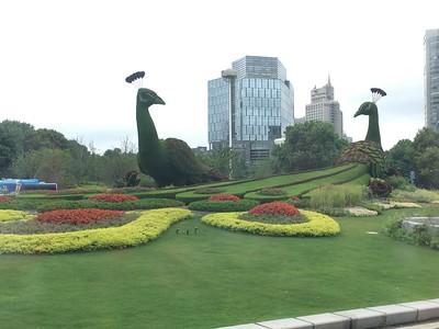 beautiful topiary everywhere