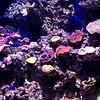 _DSC2075 Coral_DxO