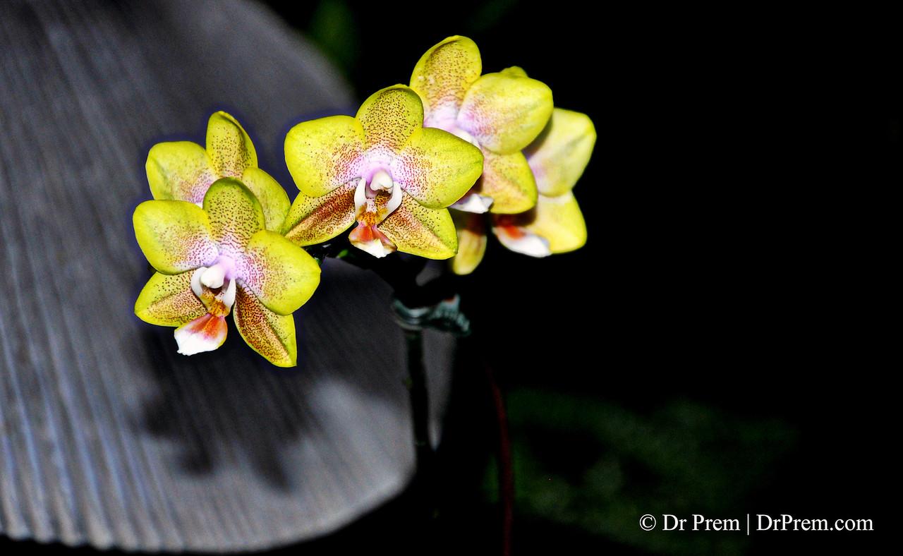 Flowers - Botanic -Garden - Orchid Garden - Singapore BY DR PREM-064