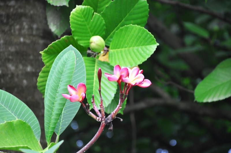Flowers - Botanic -Garden - Orchid Garden - Singapore BY DR PREM-035.jpg