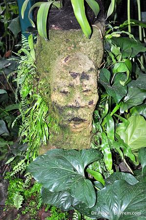 Flowers - Botanic -Garden - Orchid Garden - Singapore BY DR PREM-068