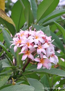 Flowers - Botanic -Garden - Orchid Garden - Singapore BY DR PREM-002