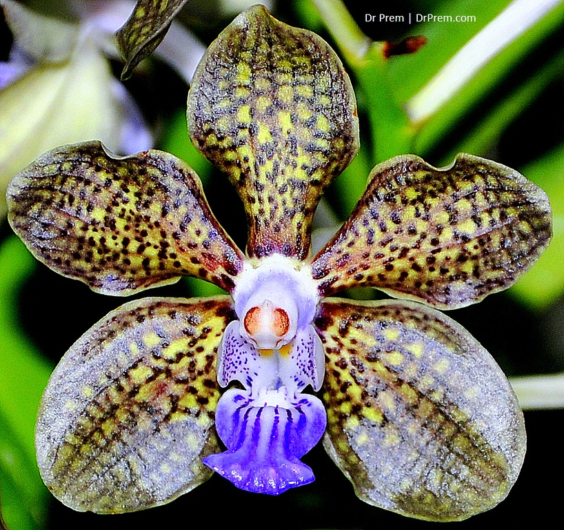Flowers - Botanic -Garden - Orchid Garden - Singapore BY DR PREM-075