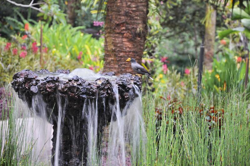 Flowers - Botanic -Garden - Orchid Garden - Singapore BY DR PREM-087