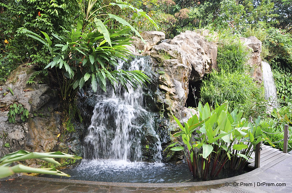 Flowers - Botanic -Garden - Orchid Garden - Singapore BY DR PREM-017
