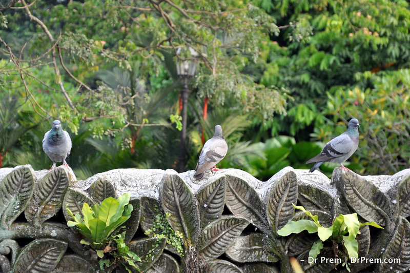 Flowers - Botanic -Garden - Orchid Garden - Singapore BY DR PREM