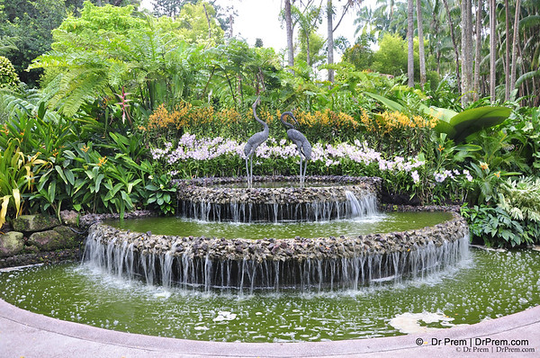 Flowers - Botanic -Garden - Orchid Garden - Singapore BY DR PREM-028